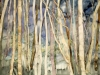 Birch Grove III