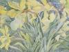 Daffodils, Van Vleck