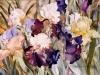 Irises, Presby Gardens