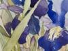 Japanese Irises, Presby Gardens