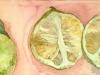 Sicilian Limes